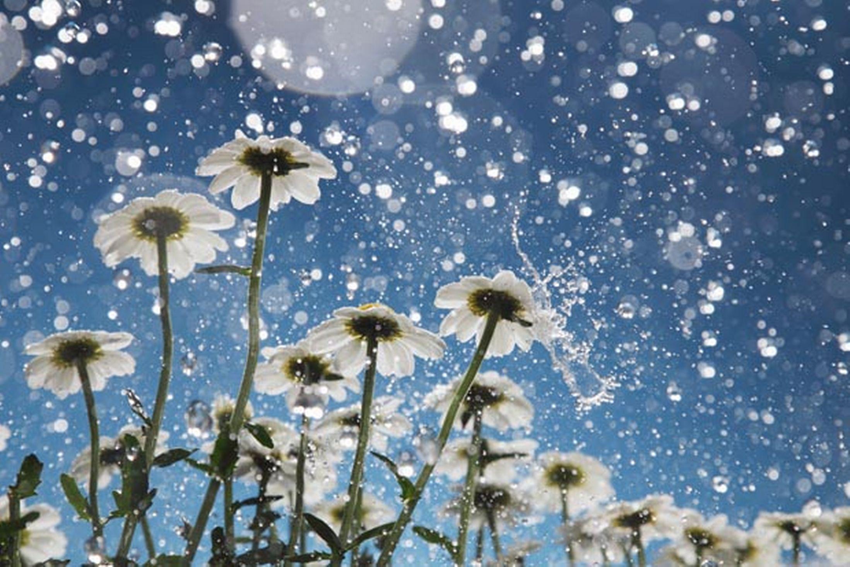 Free Download Beautiful Rain Hd Wallpapers Download Hd Wallpapers