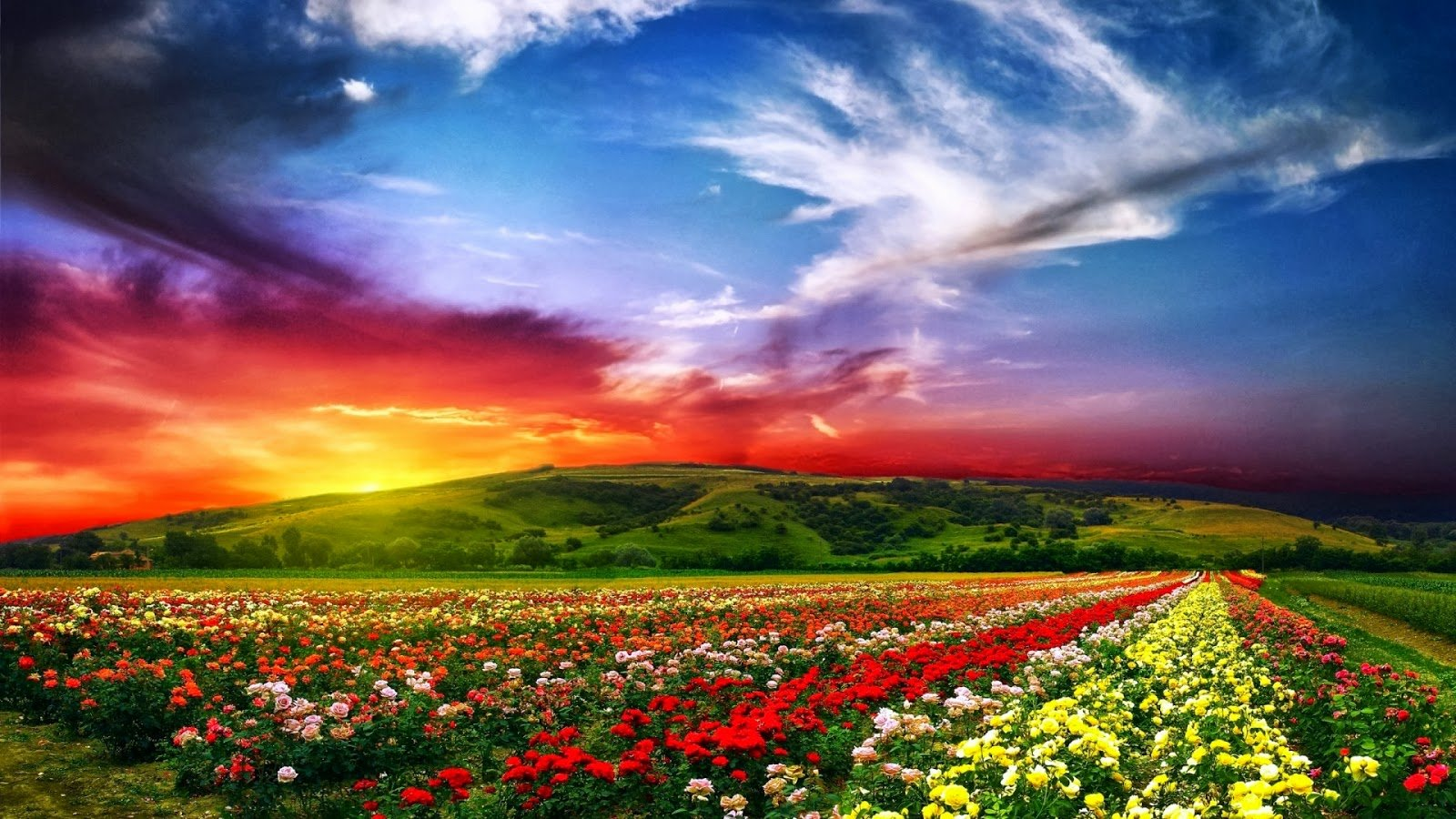nature wallpapers download full hd nature wallpapers 1600x900