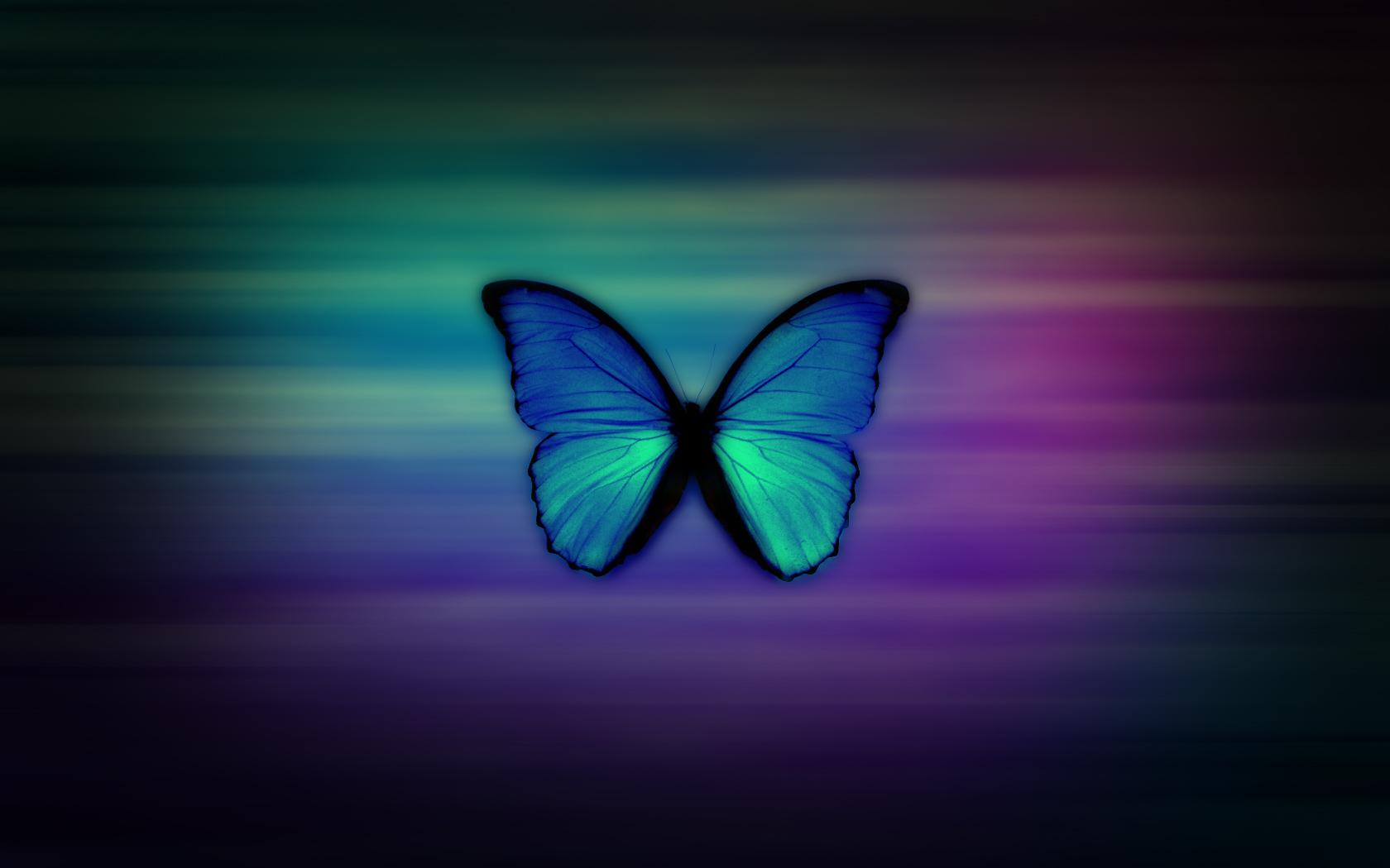 Butterfly Wallpapers HD 1680x1050