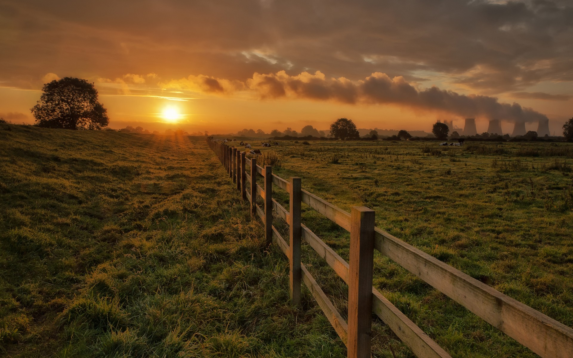corral Fence Fencing Cows Grass Trees Sun Evening Sunset 1920x1200
