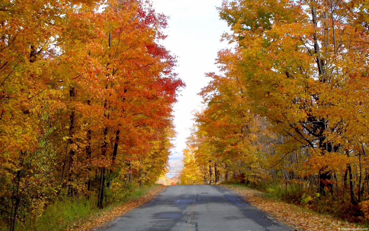 Cool Fall Wallpapers
