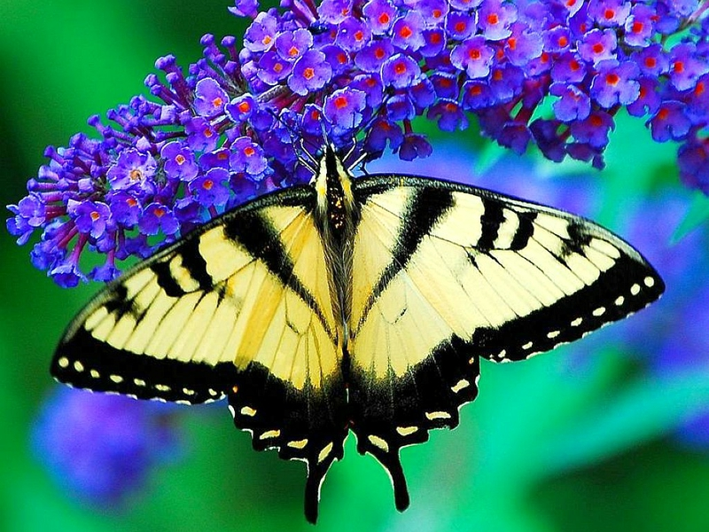 Free download the image Beautiful Flowers and Butterflies