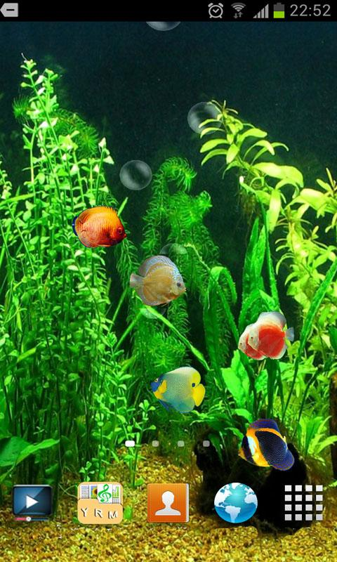 description hd 3d fish tank live wallpaper colorful fish appear on the 480x800