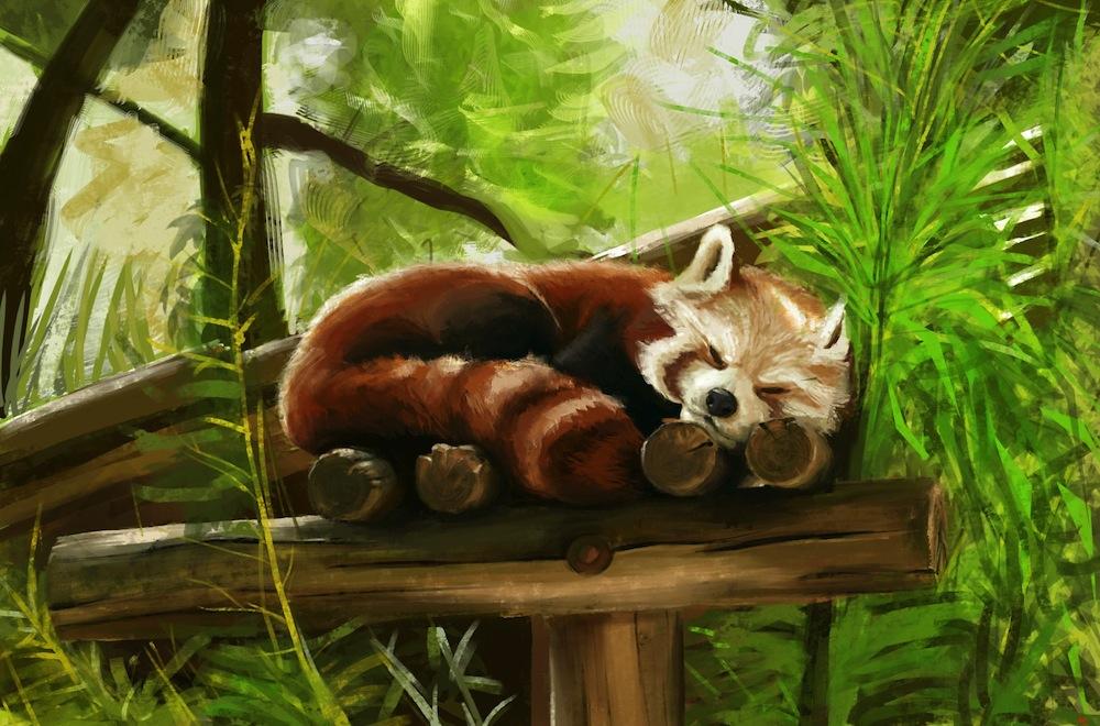 Baby Red Panda Wallpaper - WallpaperSafari