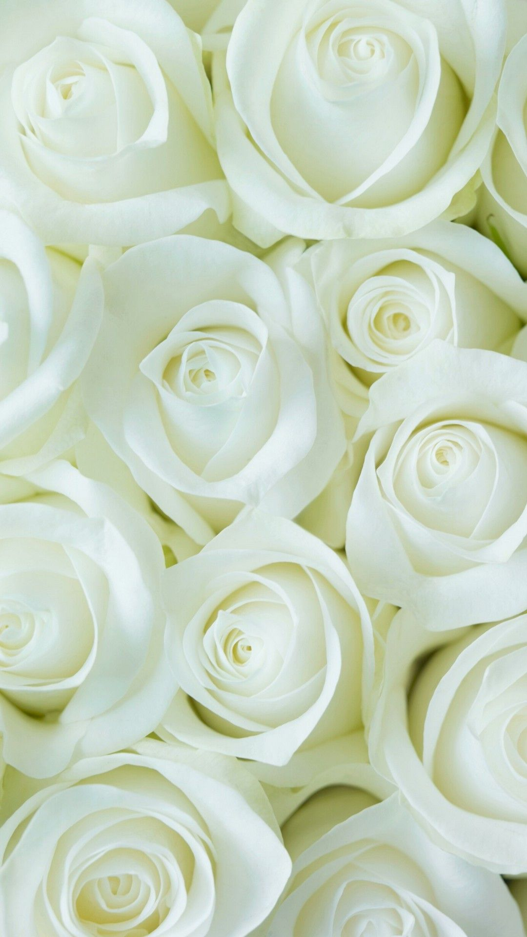 White Flower Wallpaper For Mobile Android Best HD Wallpapers in 1080x1920