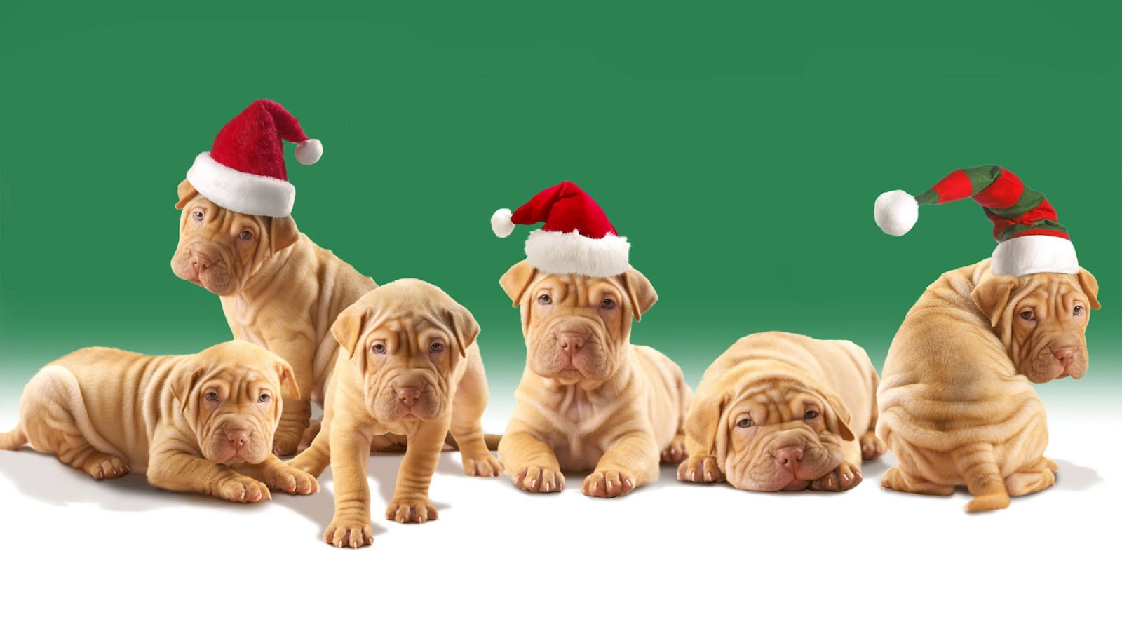 Cute Christmas Dog   Wallpapers Pictures Pics Photos Images 1600x900