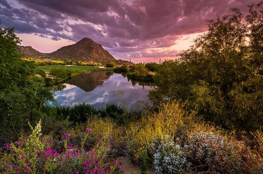 Sonoran Desert Spring Bloom Sunset by Scott McGuire 900x596