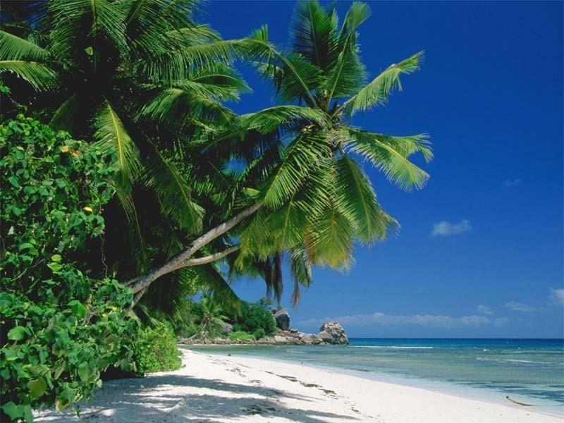 florida beach wallpaper beach 800x600