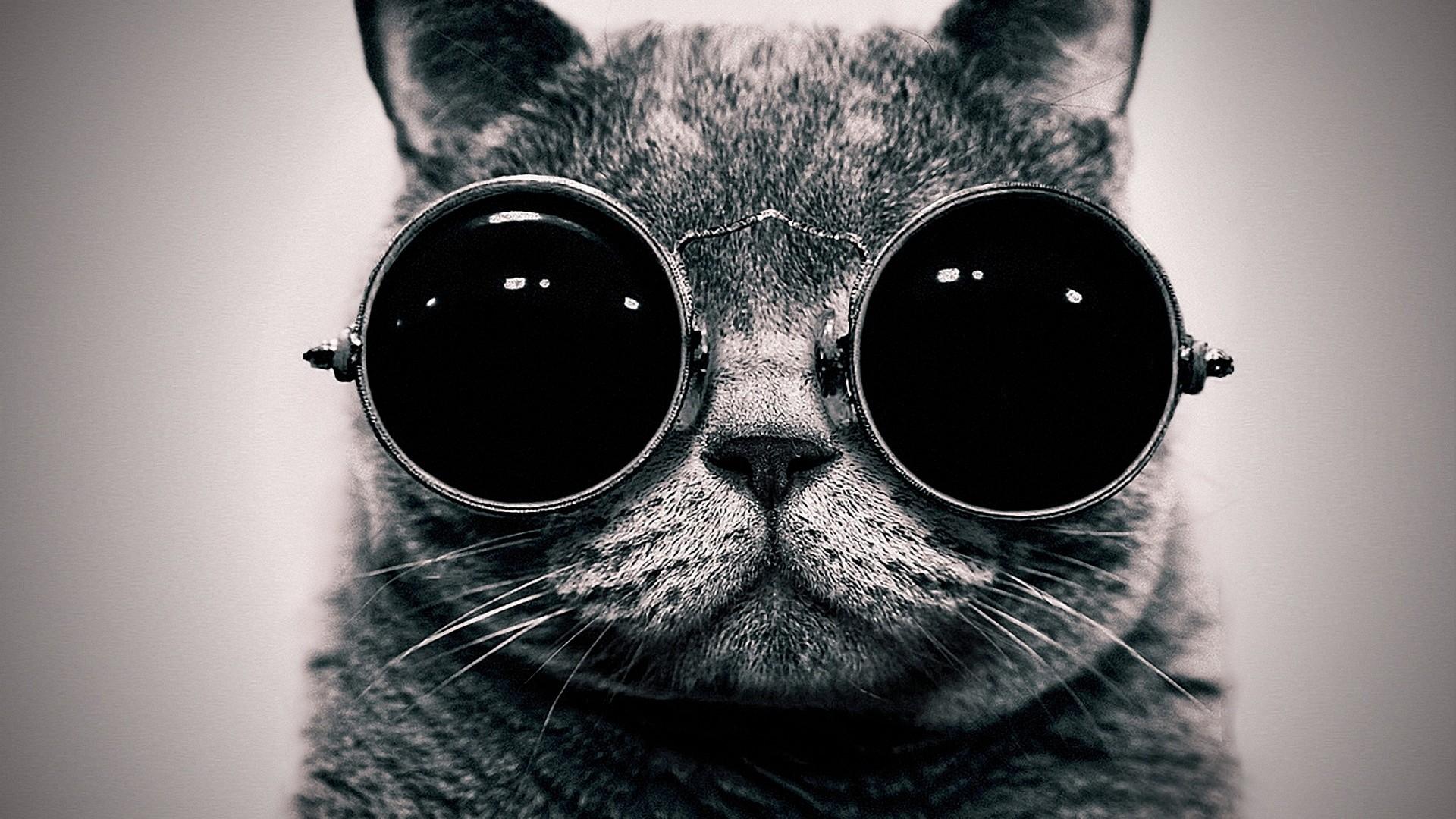 Cat In The Glasses Wallpaper   Download Wallpaper Nature 1920x1080