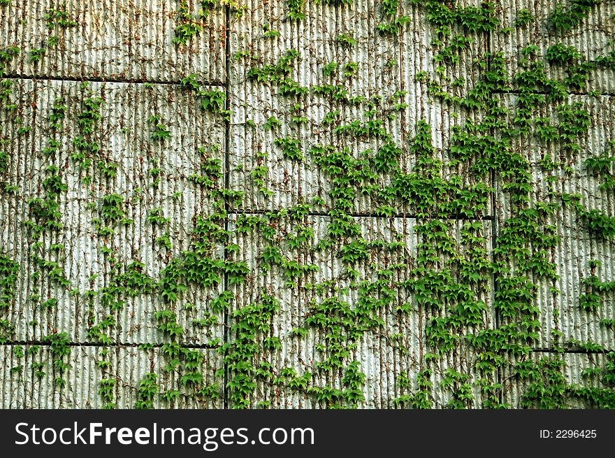 Block Wall Vines Background   Stock Images Photos 880x655