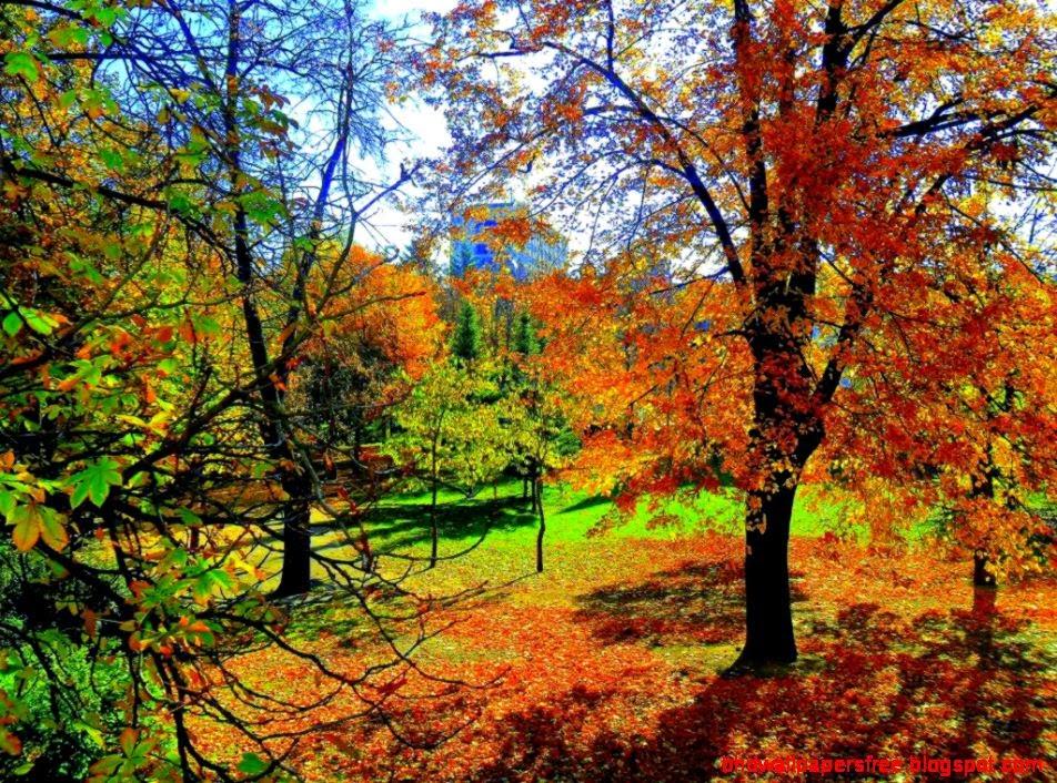 Gorgeous Autumn Scenery Ipad 3 Wallpaper HD Wallpapers 952x706