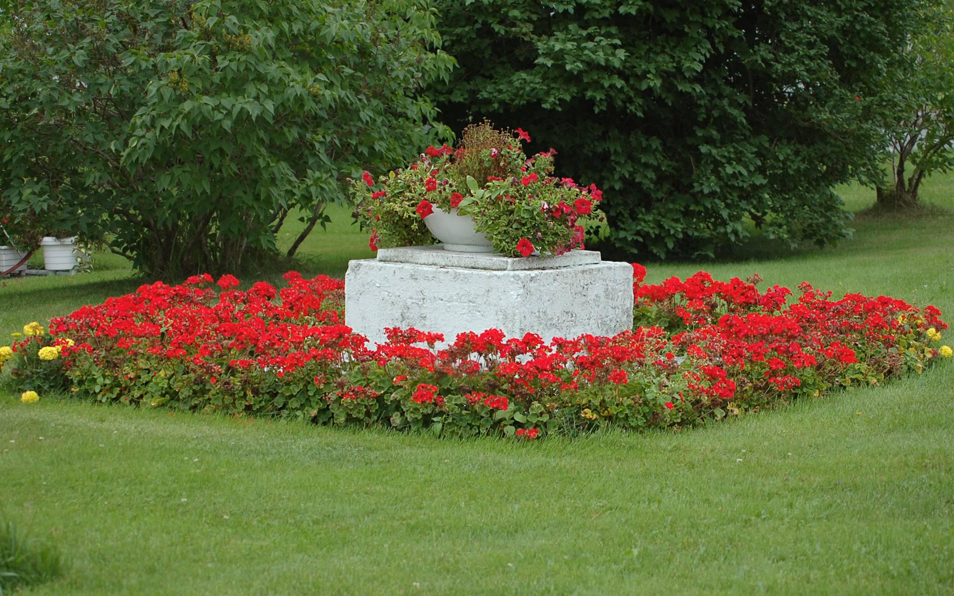 Flower Garden Backgrounds 1920x1200