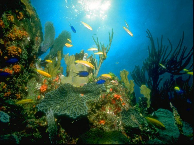 Aquarium reef quotes 6021642 - orino info