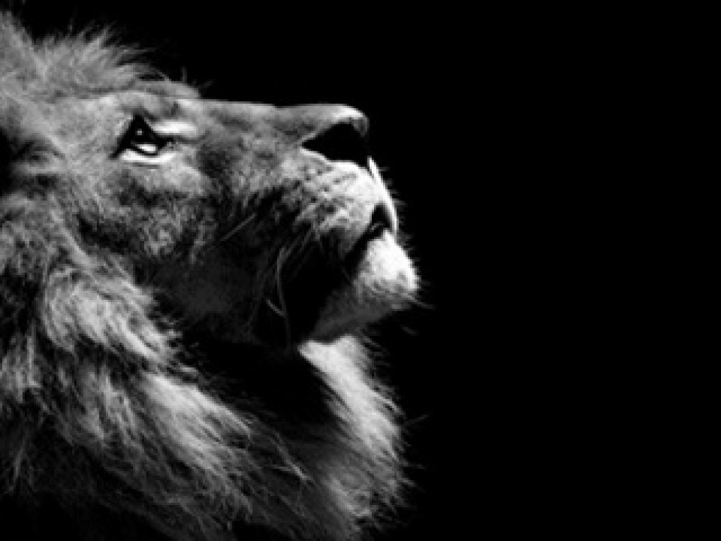 Download 1000 Wallpaper Black Lion Hd HD Terbaik