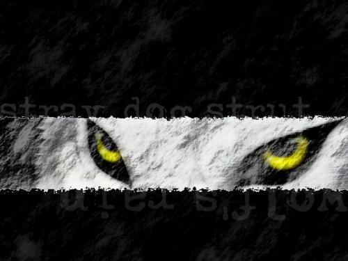 High Resolution Pokemon wallpaper 500x375