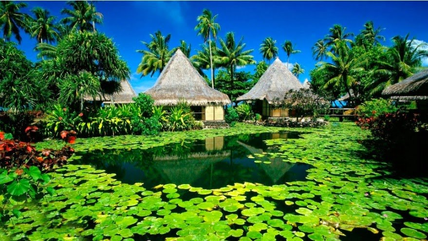 Exotic Resort Wallpapers HD theme for Windows 7 and 8 Gavie Themes 879x495