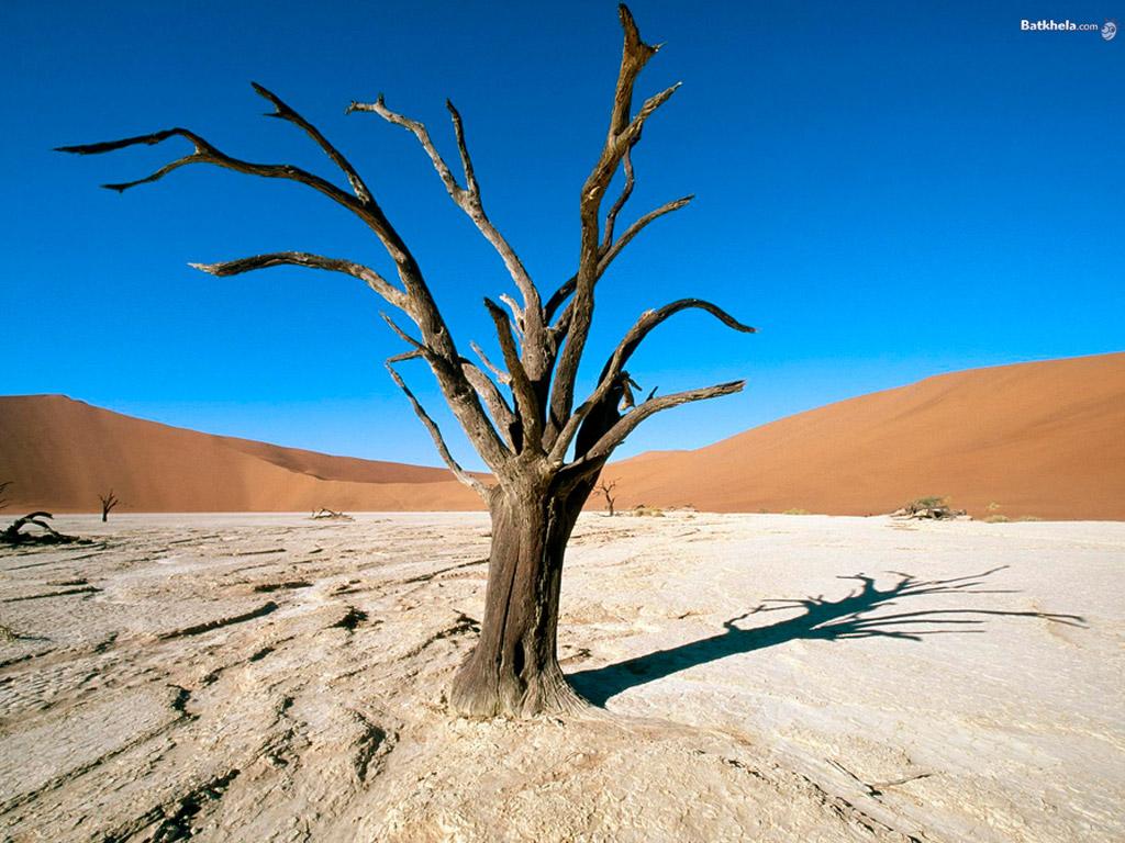 Dead Trees in Desert Wallpaper   Nature Wallpaper 1024x768