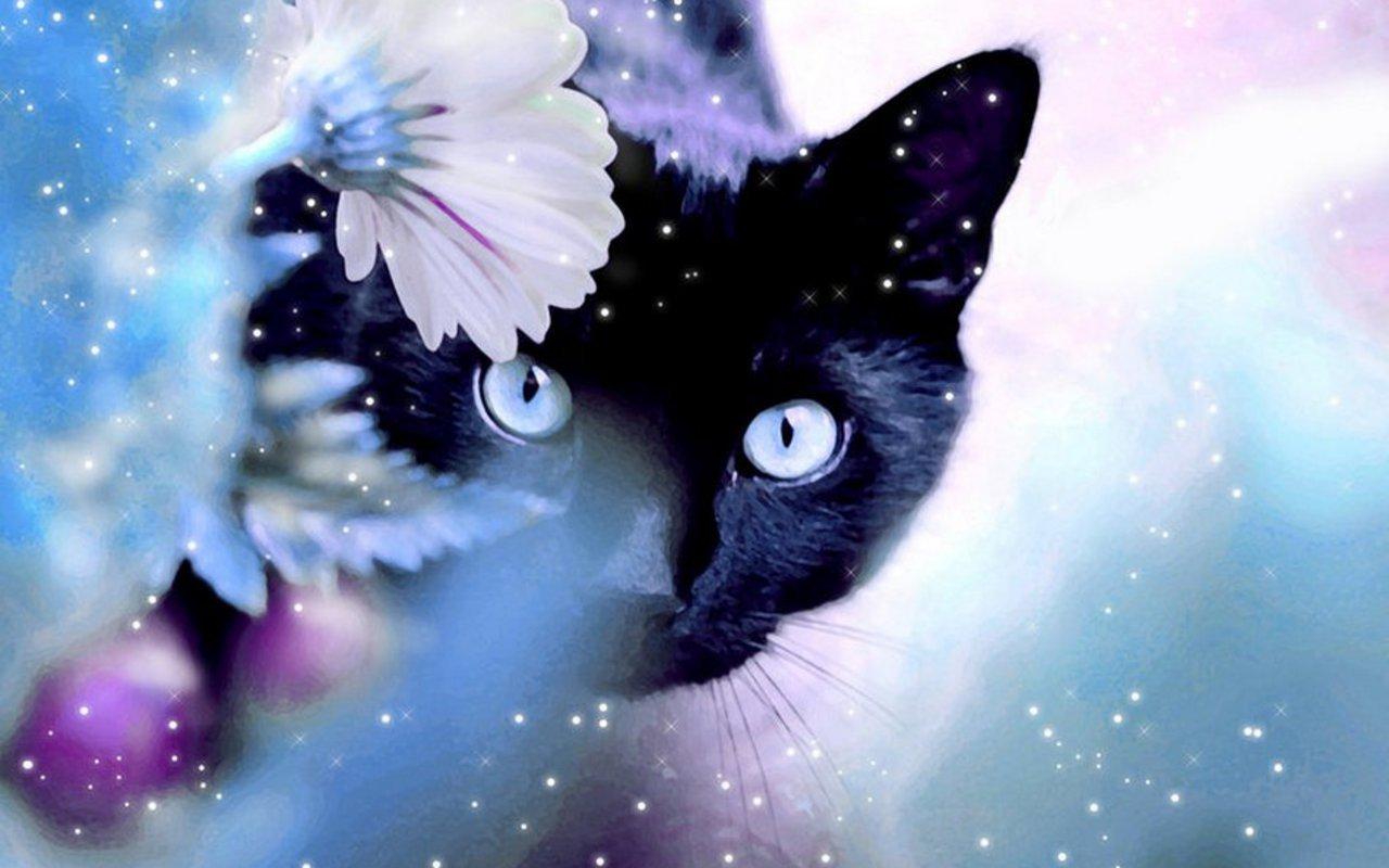 BreaktimeFun Beautiful Cat Wallpaper 1280x800