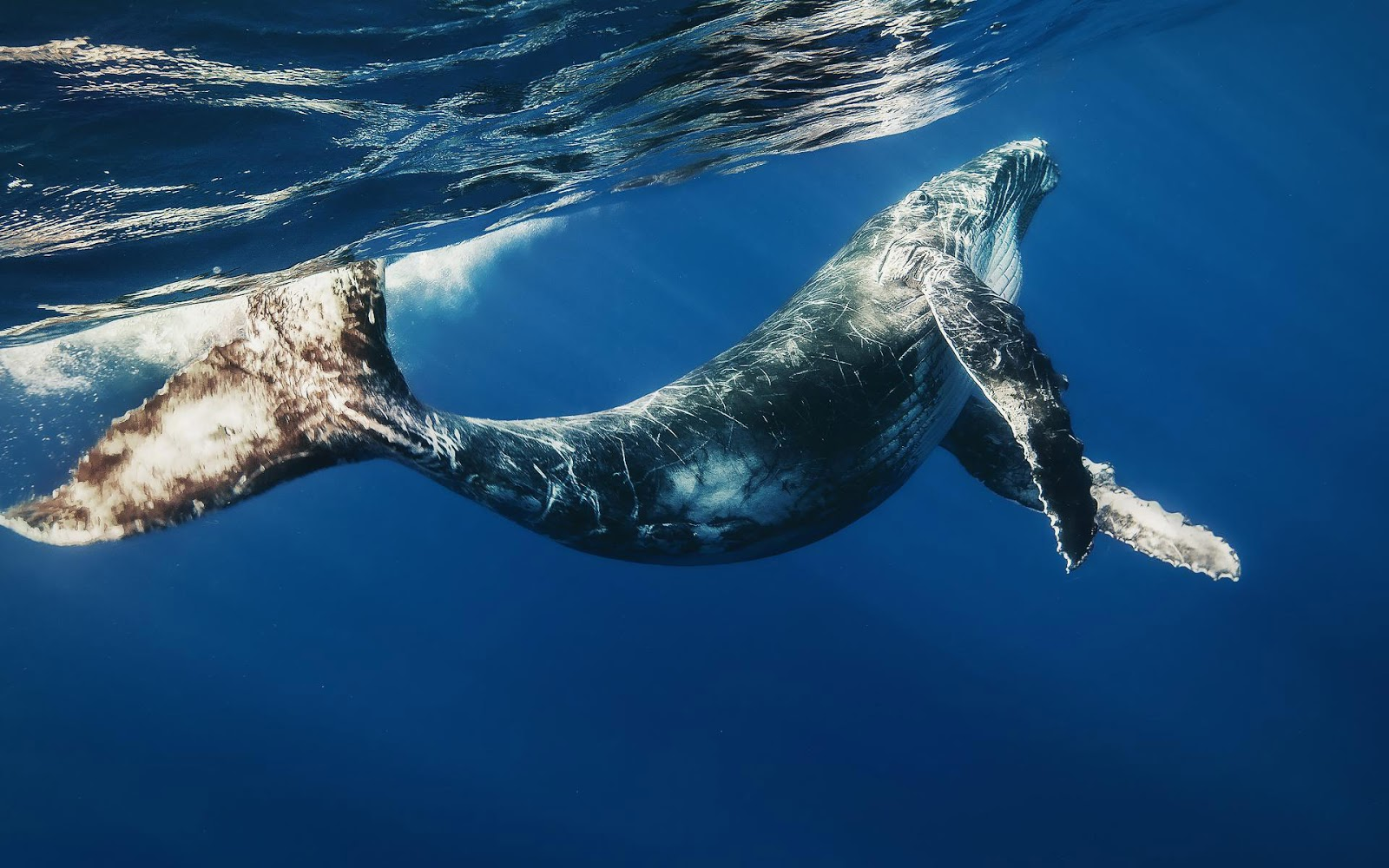 Baby whale wallpaper HD Animals Wallpapers 1600x1000