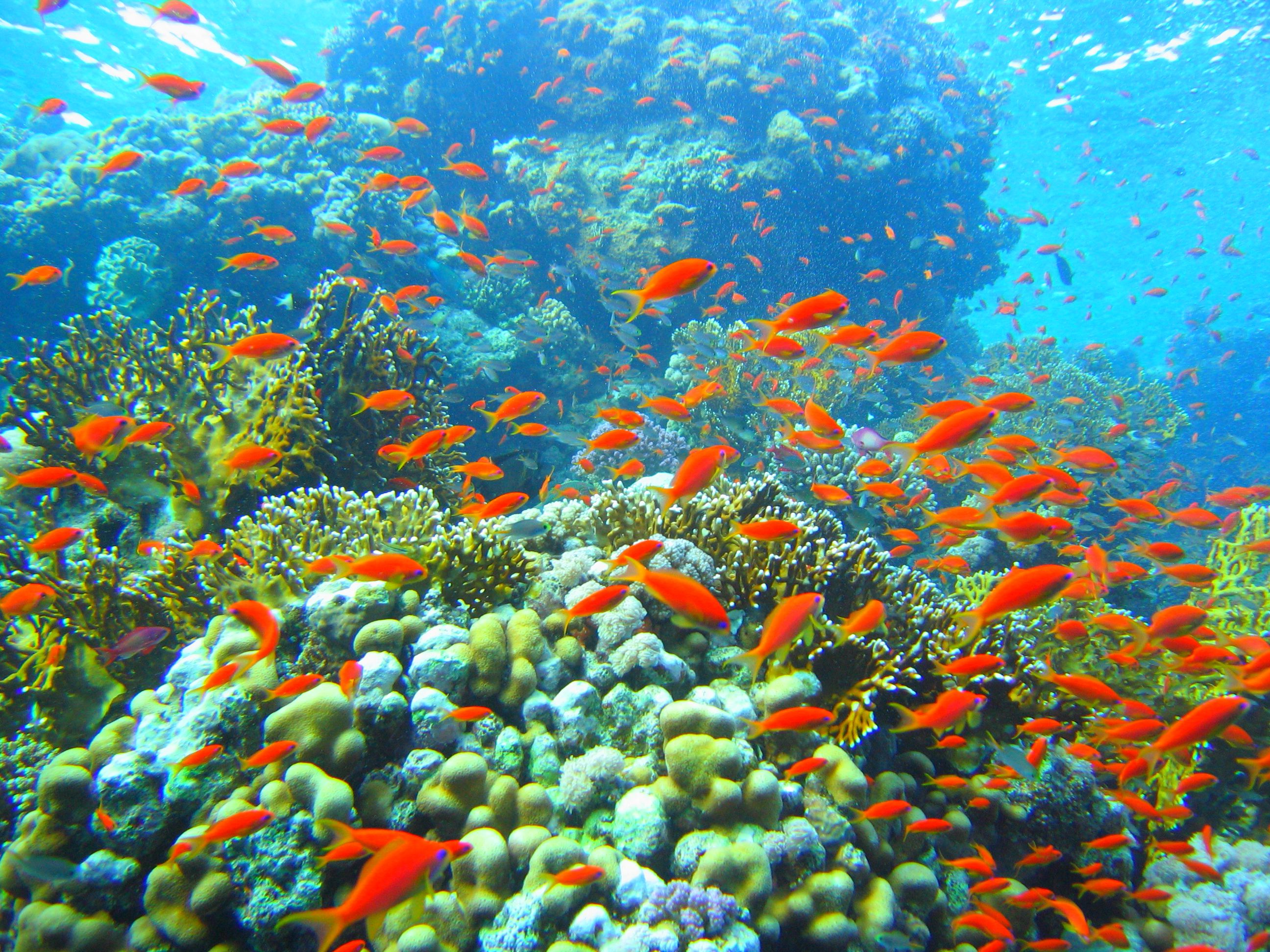 Beautiful Colorful Coral Reefs HD4Wallpapernet 2592x1944