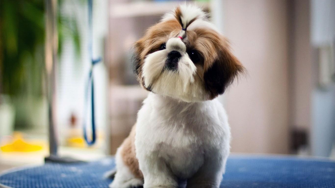 Very cute dog   1080 HD Wallpaper 1366x768