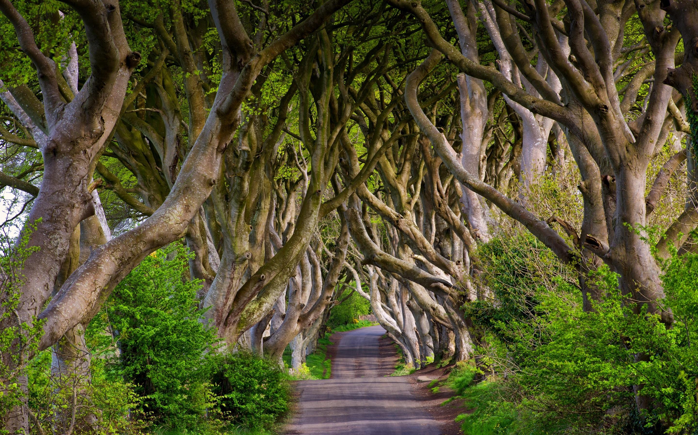 54] Dark Hedges Northern Ireland Wallpaper on WallpaperSafari 2880x1800