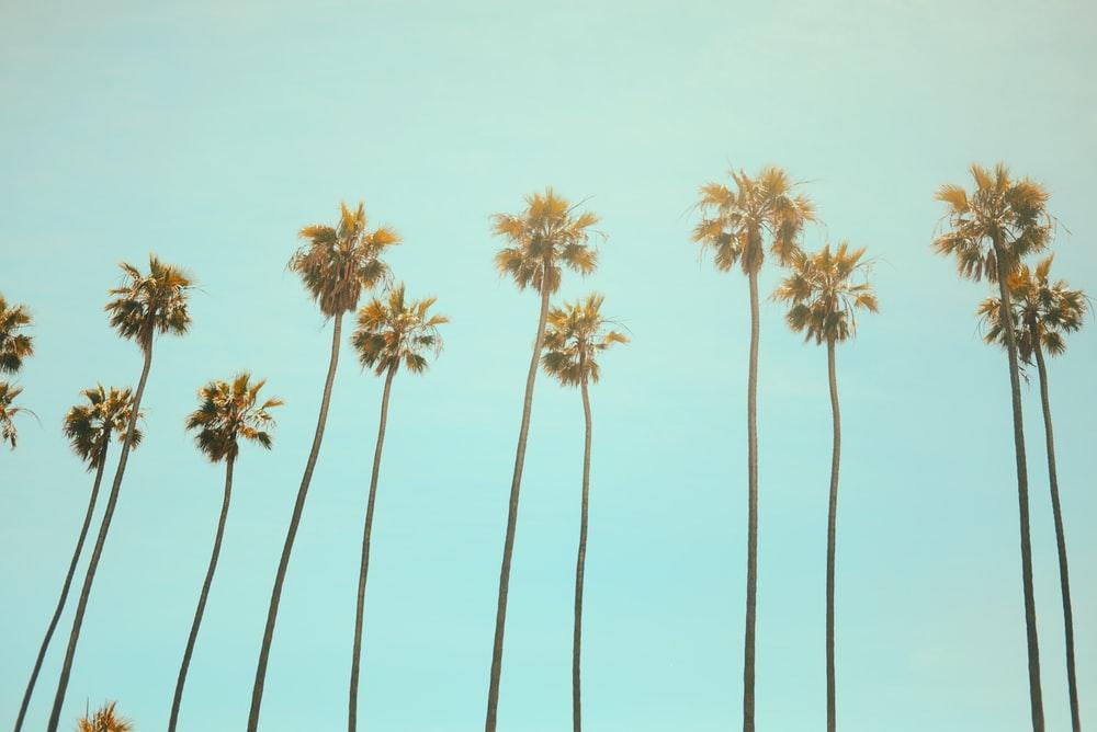 California Wallpapers HD Download [500 HQ] Unsplash 1000x668