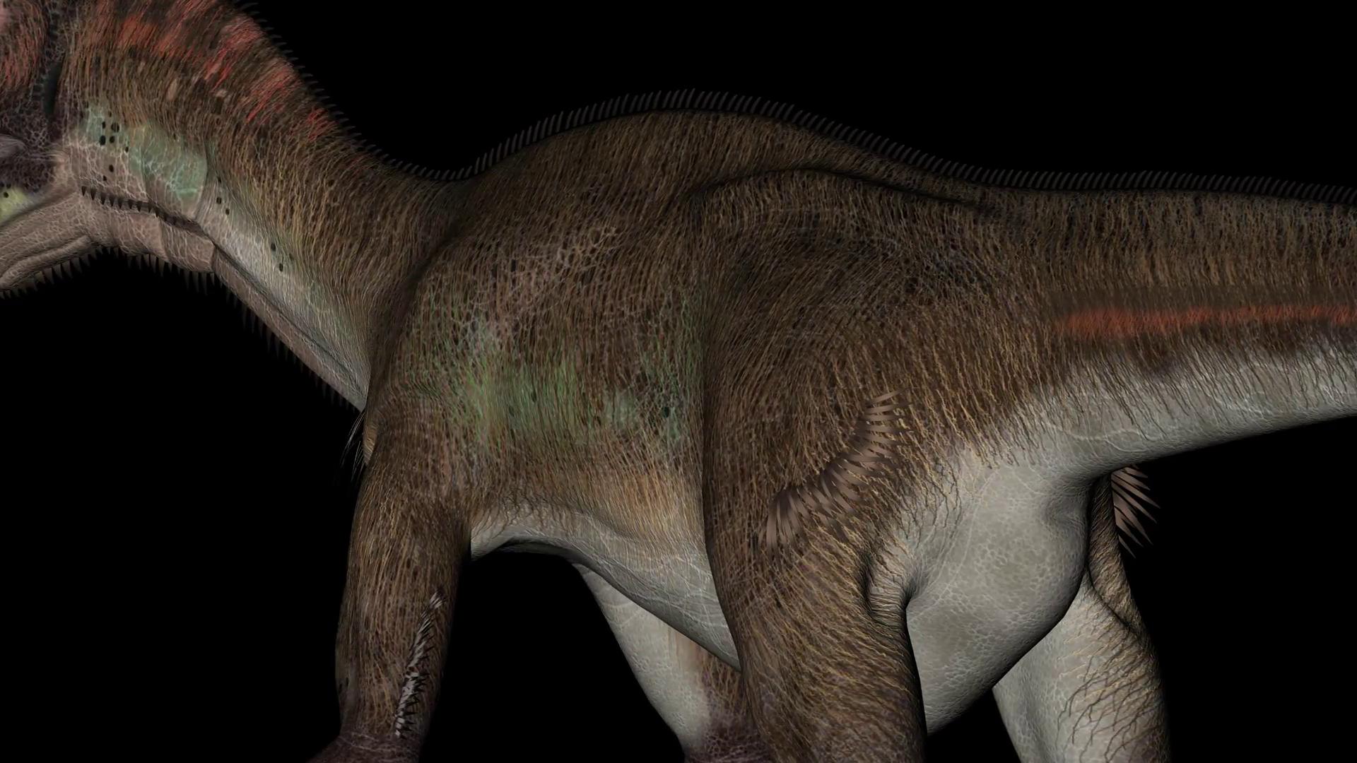 Detail of Body of Utahraptor Dinosaur in Rotation on Black 1920x1080