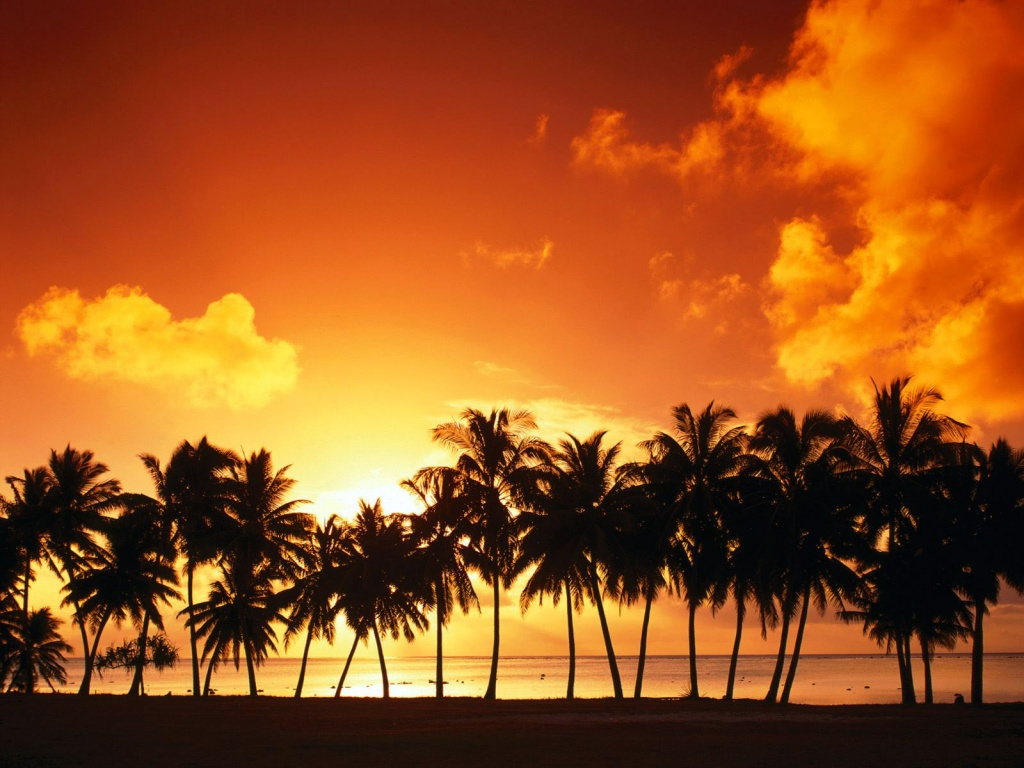 1024x768 Line of palm trees desktop PC and Mac wallpaper 1024x768