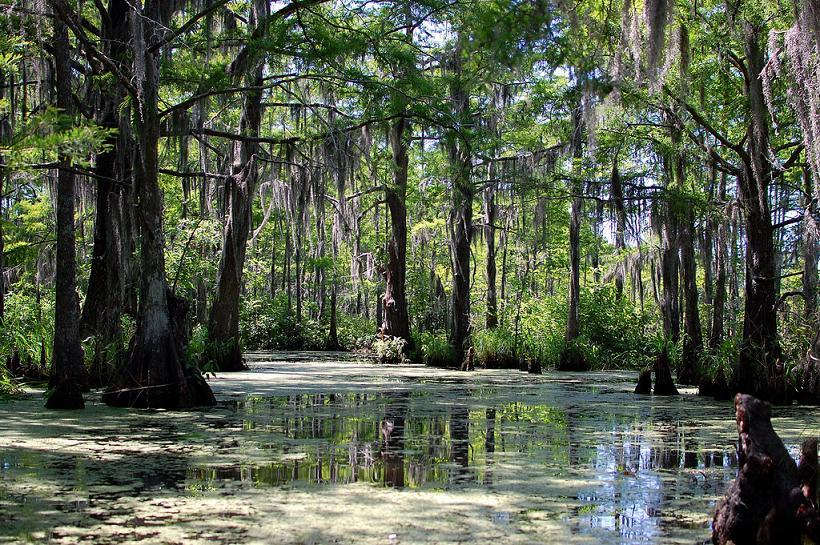 Louisiana Swamp Wallpaper