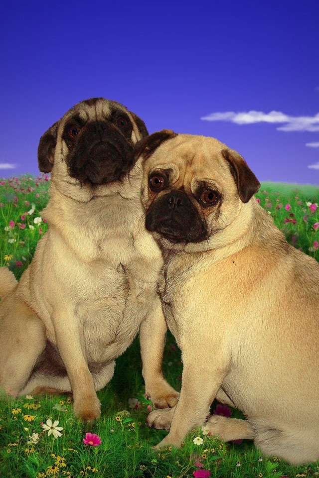 Dogs And Puppies Wallpaper Dog Wallpapers and Scr...