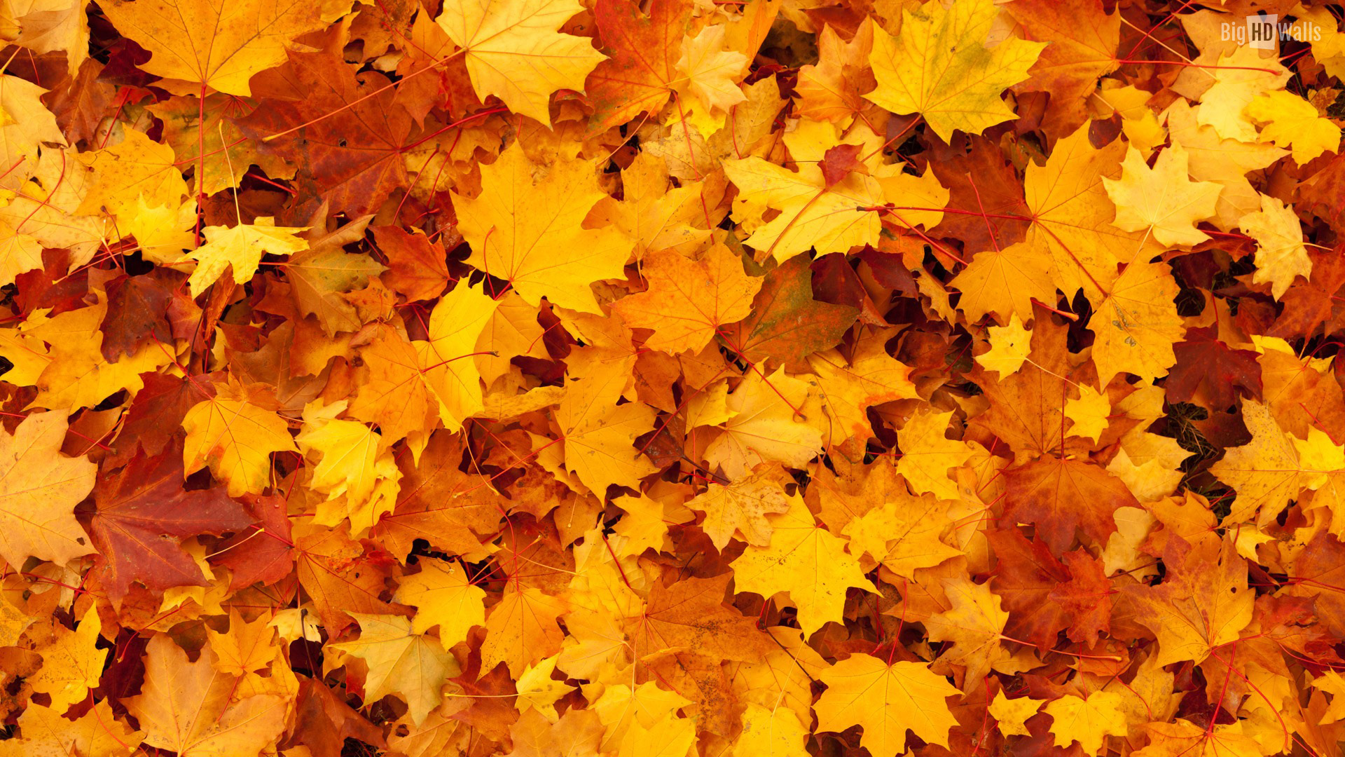 Fall thanksgiving wallpaper wallpapersafari as the leaves turn orange yellow and gold it reminds us of autumn 1920x1080 voltagebd Gallery