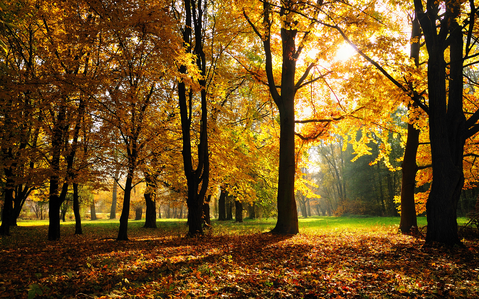 75 Free Wallpaper Fall Season On Wallpapersafari