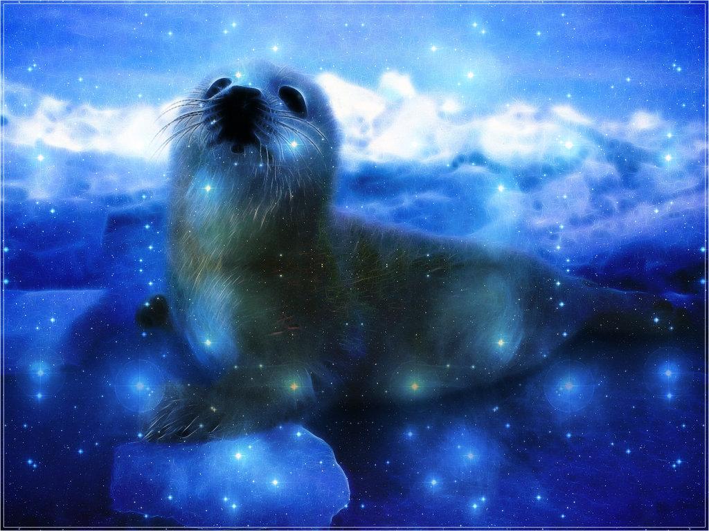 Cute Baby Seals 9361 Hd Wallpapers: WallpaperSafari
