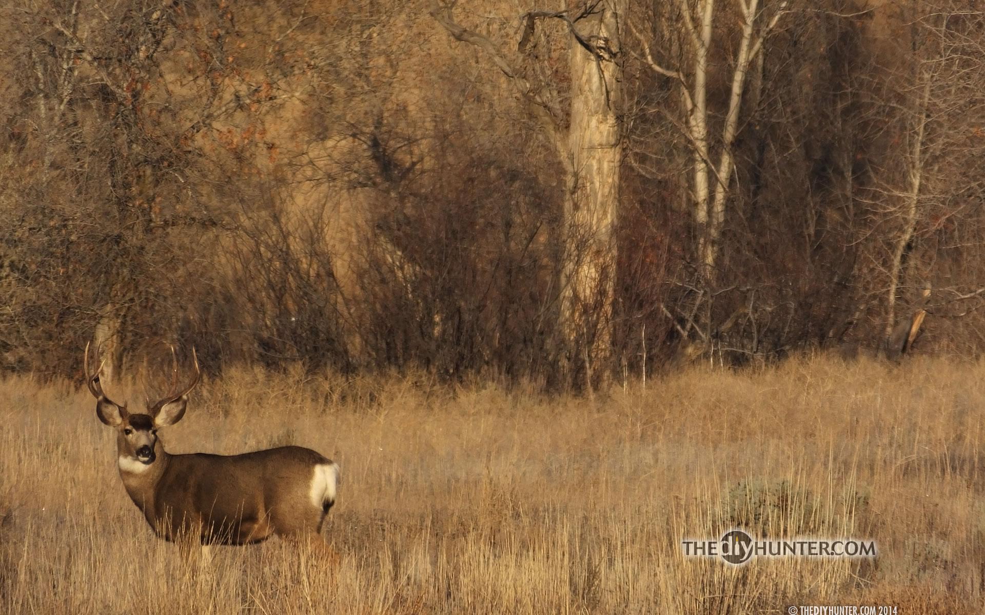 Big game hunting wallpaper wallpapersafari - Elk hunting wallpaper ...