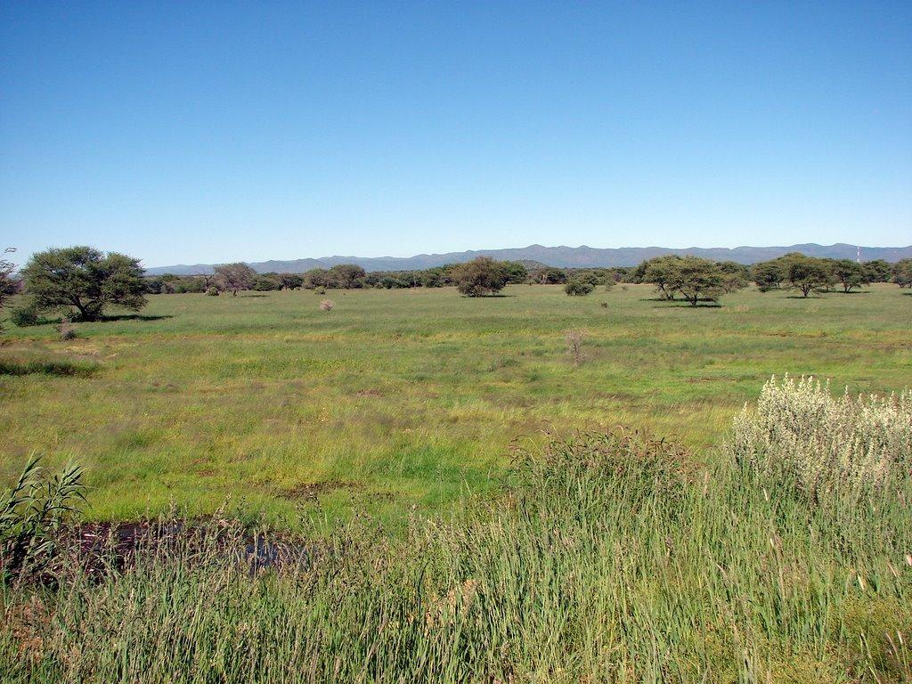 African Grasslands Related Keywords - African Grasslands ...