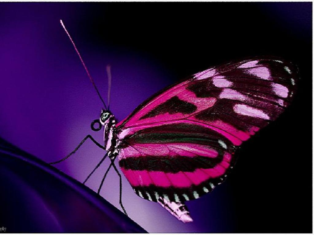 Funny animated butterfly wallpaper Funny Animal 1024x768