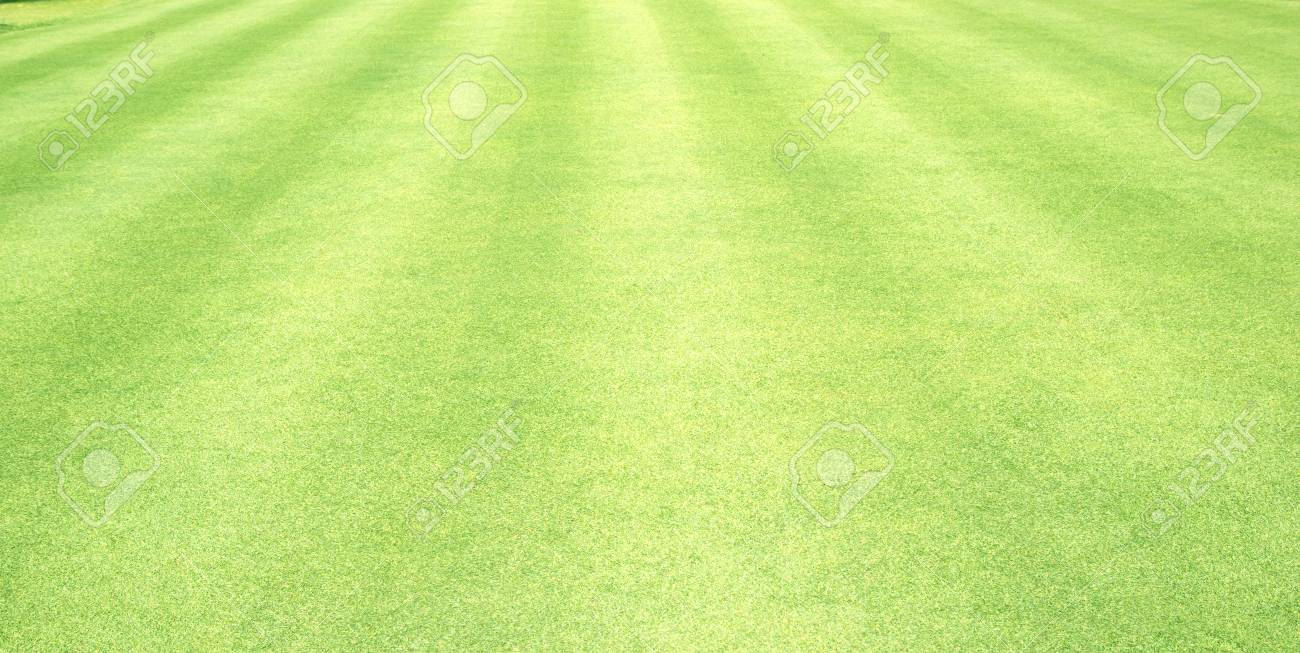 Grass Field Green Grass Background Lawn Background Stock Photo 1300x653