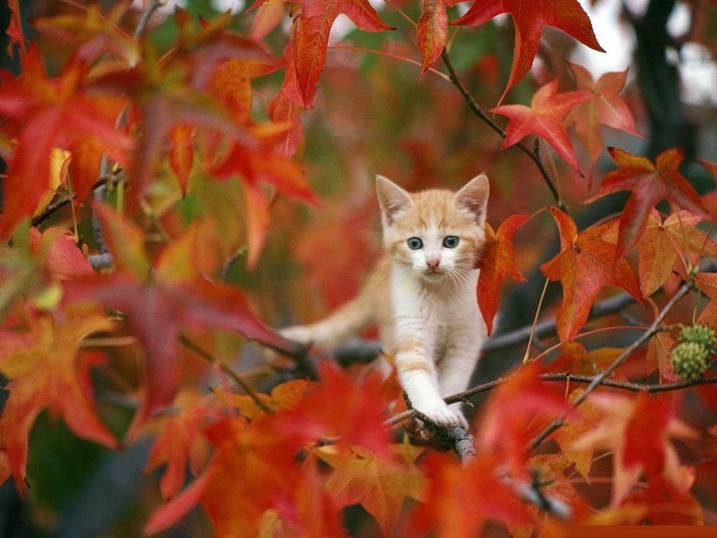 autumn desktop background autumn desktop backgrounds Desktop 1024x768