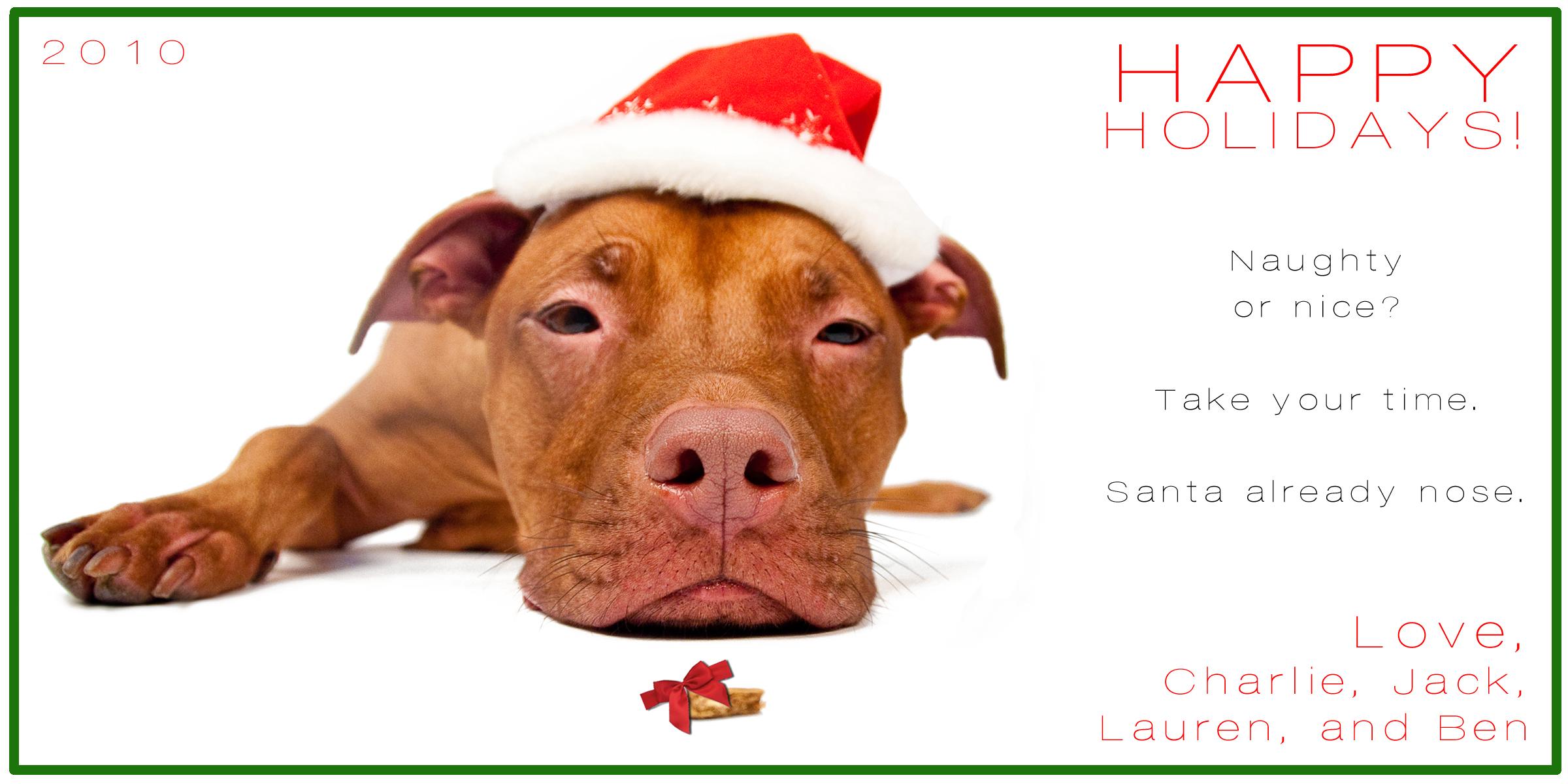Christmas Pitbull Wallpaper - WallpaperSafari