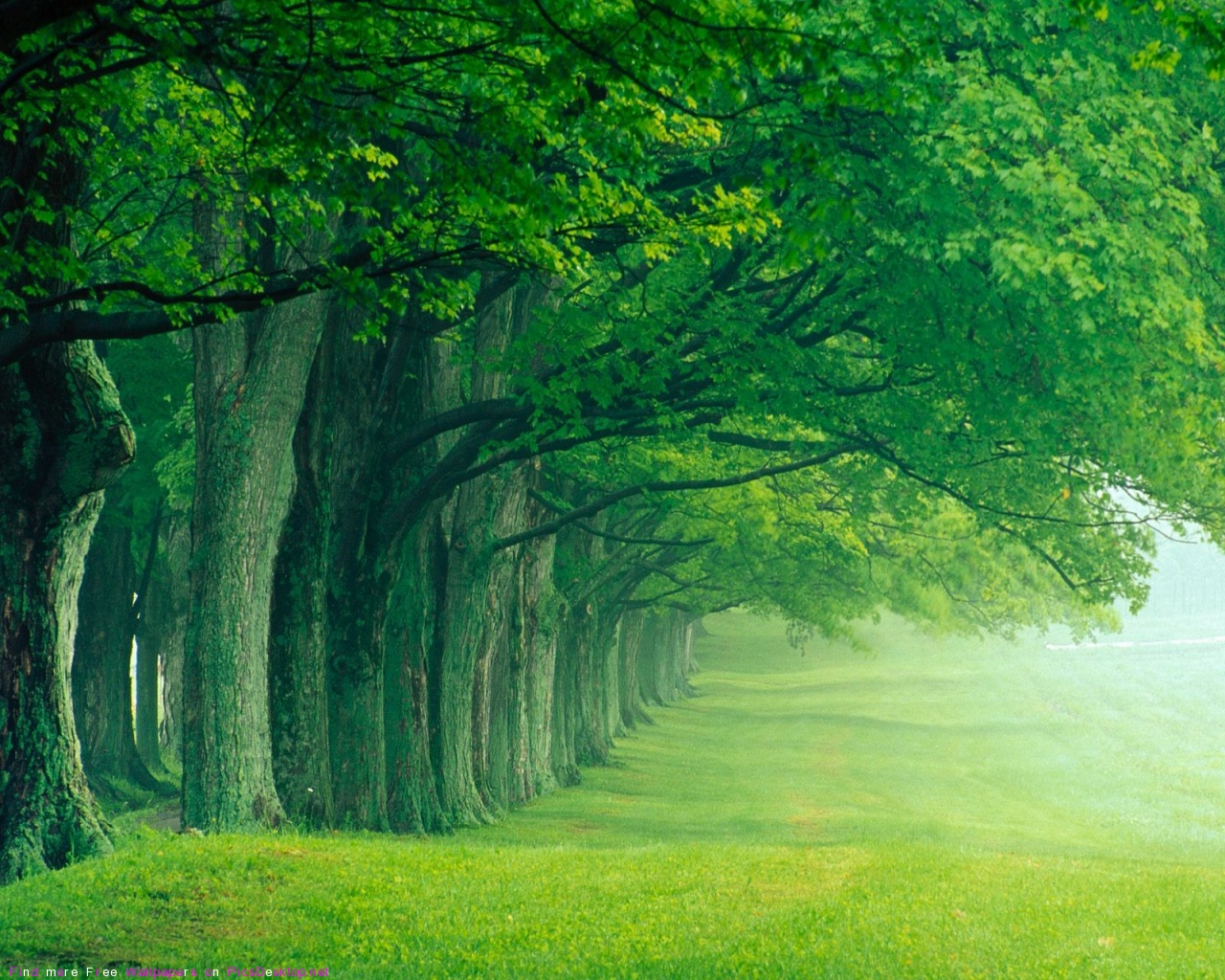 World Visits Green Forest best wallpapers images 1280x1024