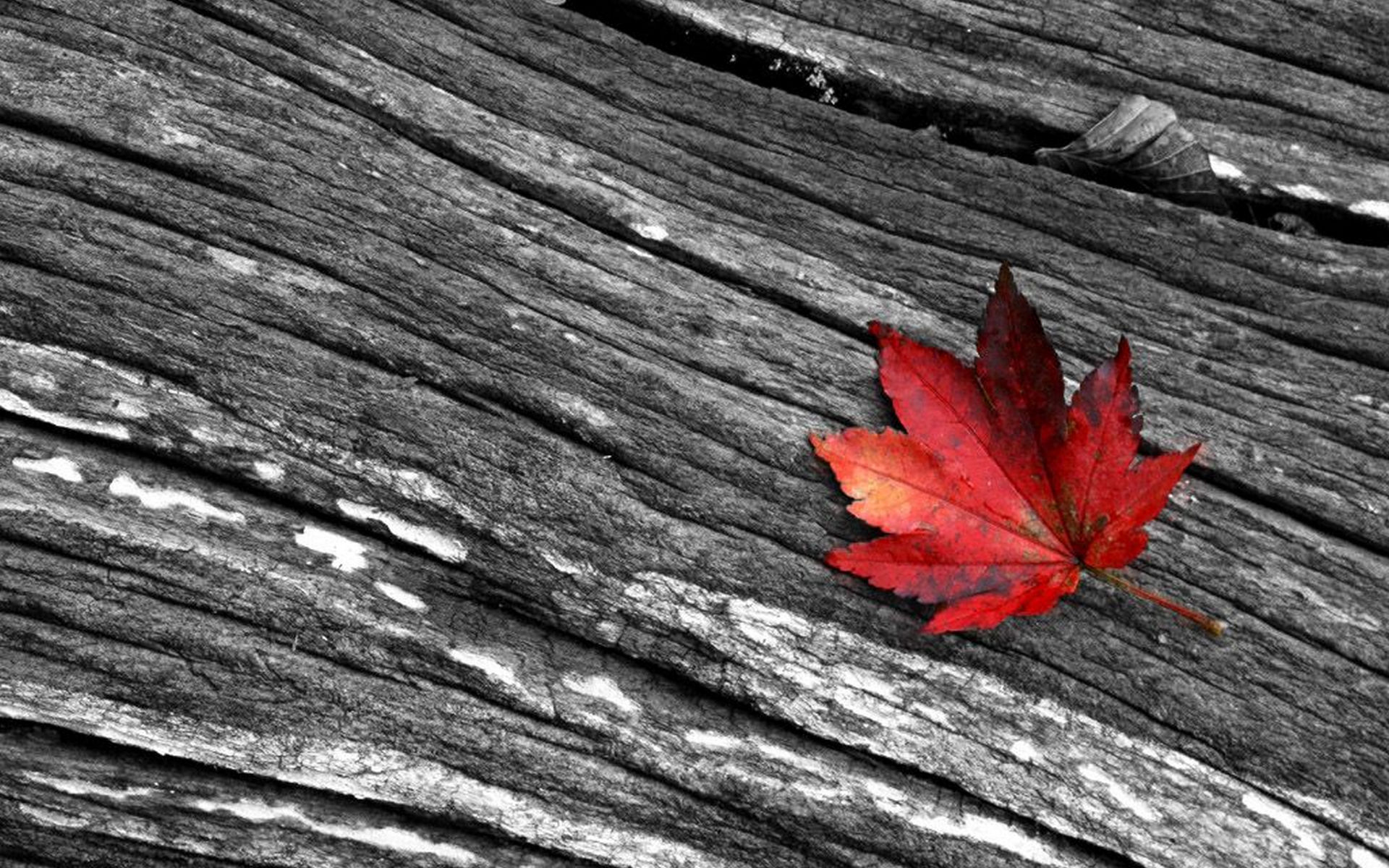 Leaves Black And White Photography Wallpaper 1920x1200