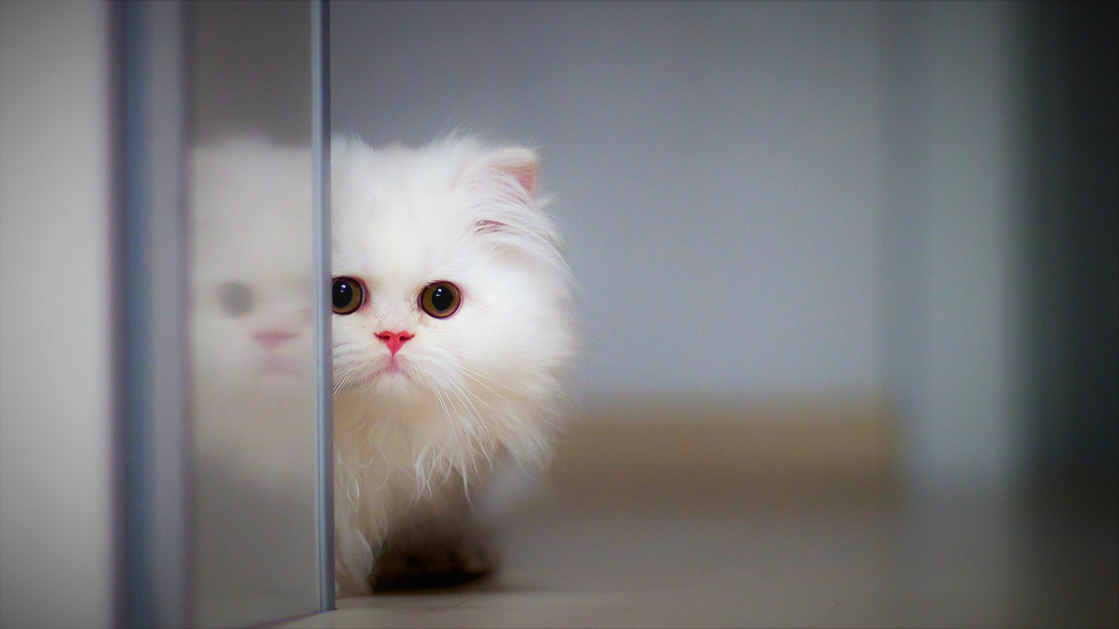39 Cute HD Wallpapers Backgrounds 3840x2160