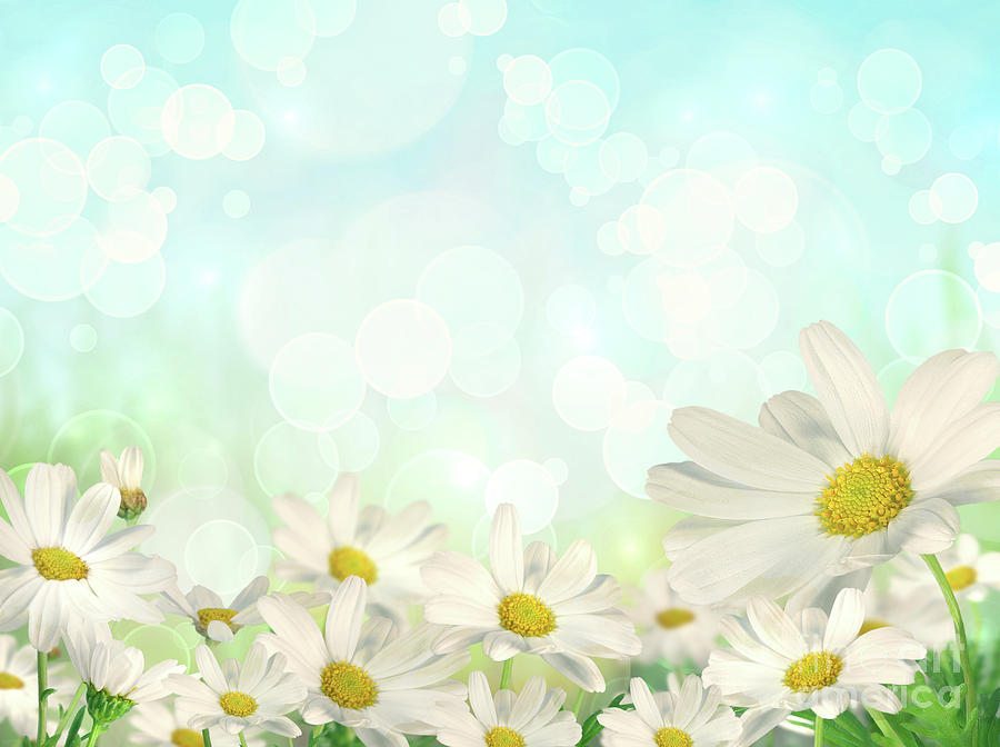 Spring Background With Daisies by Sandra Cunningham 900x672