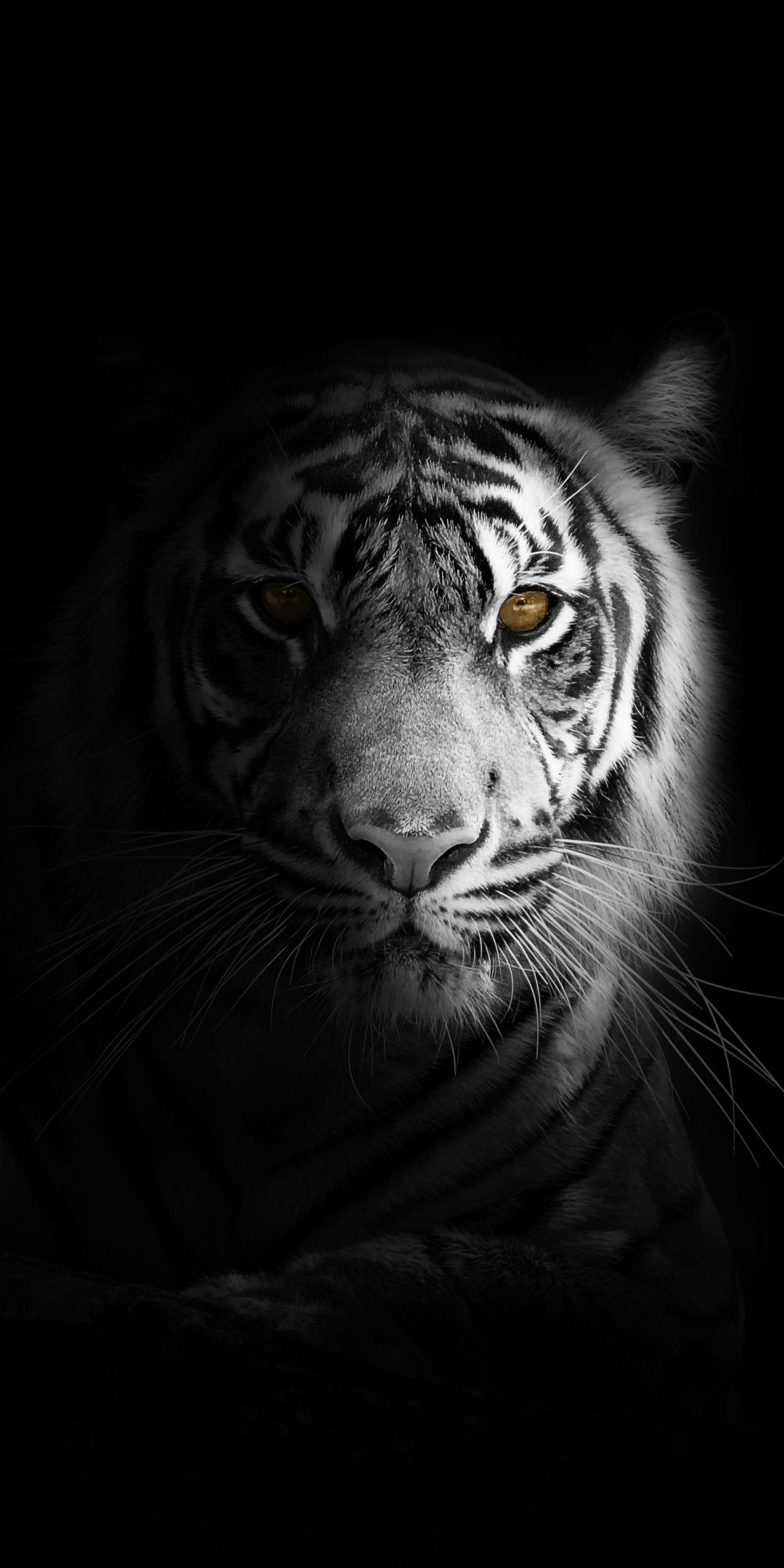 Portrait minimal white tiger dark Wallpaper Tiger wallpaper 1080x2160