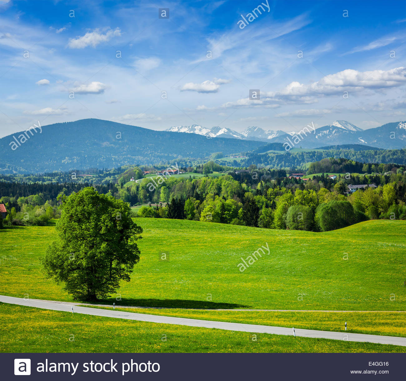 Road in pastoral germany countryside with Bavarian Alps in 1300x1219