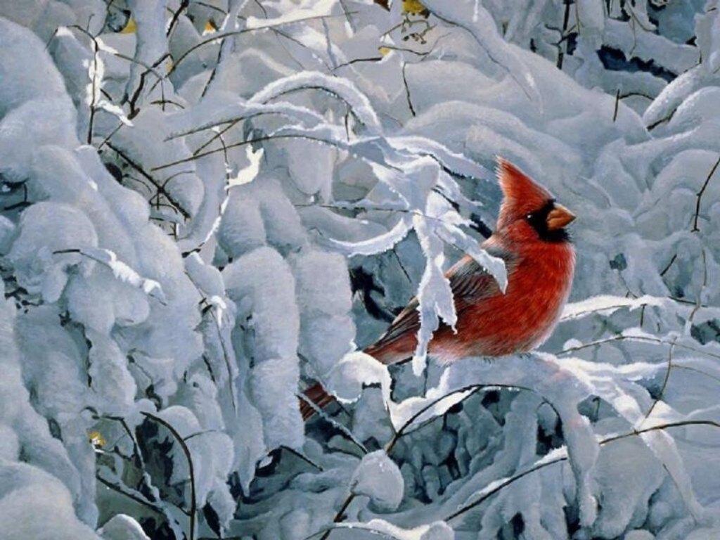 Winter Cardinal Bird Computer Backgrounds 3821   HD Wallpapers Site 1024x768