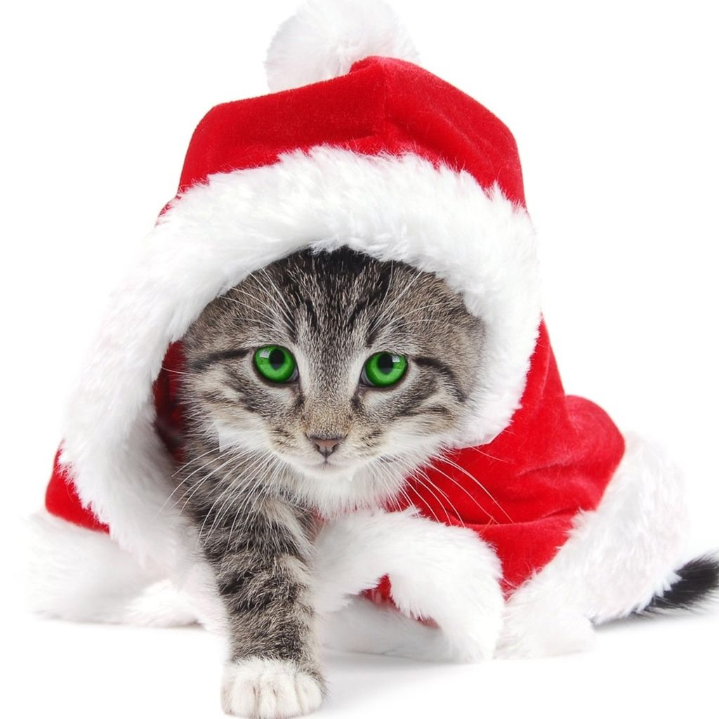 Free download Cute kitty cat christmas wallpaper Cute cat dress up as Santa  [1024x1024] for your Desktop, Mobile & Tablet | Explore 50+ Cute Cat Dressed  Wallpapers | Cute Cat Dressed Wallpapers,