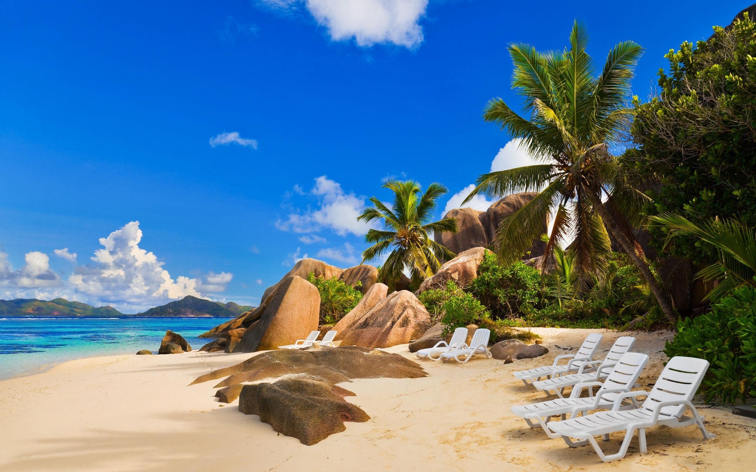 Beach Palm Trees HD Wallpaper ImageBankbiz 2560x1600