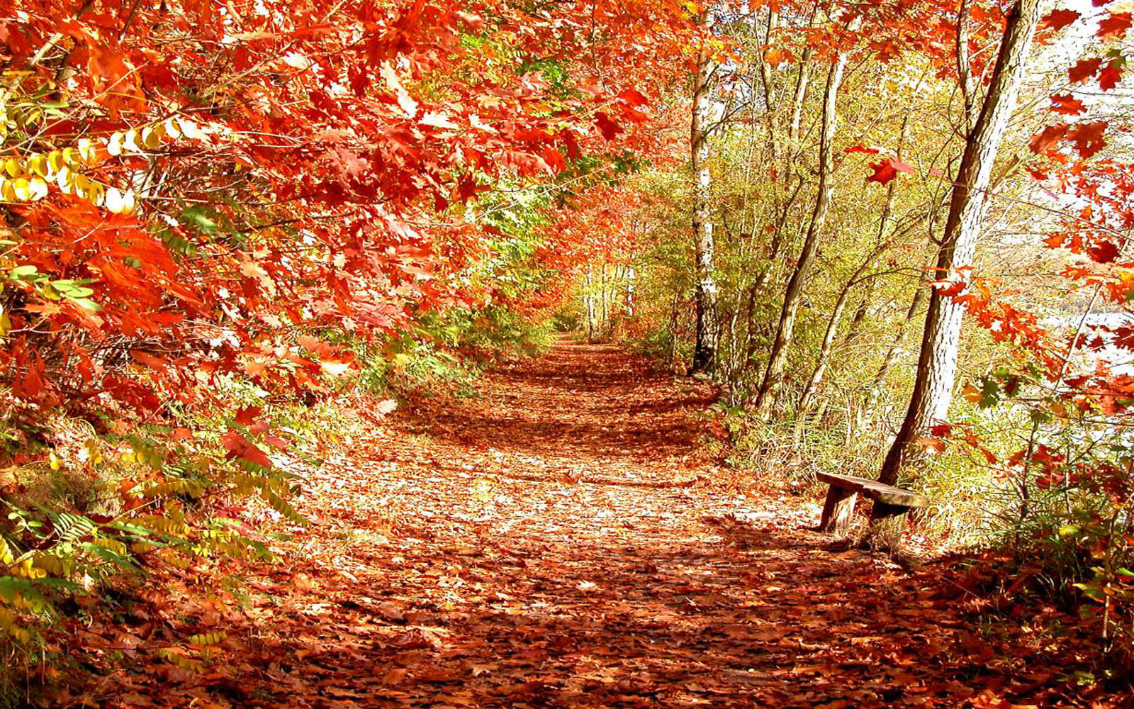 Beautiful Fall Backgrounds For Desktop Wallpapers beautiful autumn 1600x1000